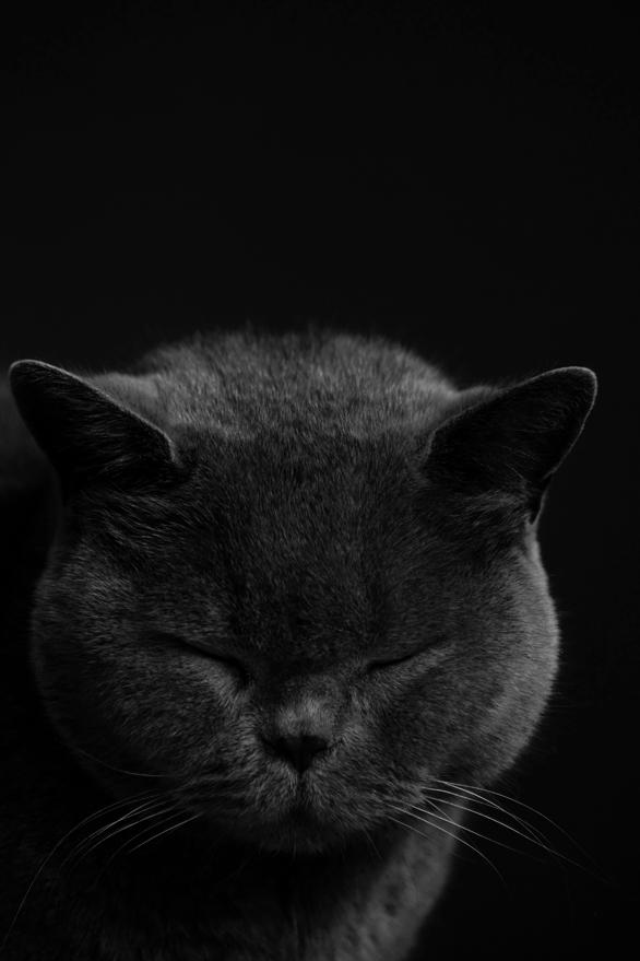 Sleepy Head by FeliDae84