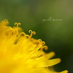 Spring Melody by FeliDae84