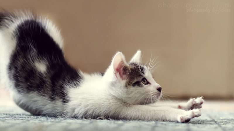 lethargic kitten but eating
