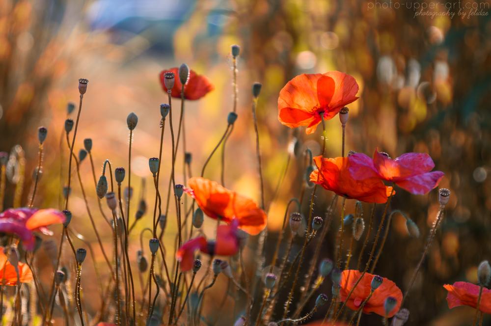 An einem warmen Sommermorgen by FeliDae84