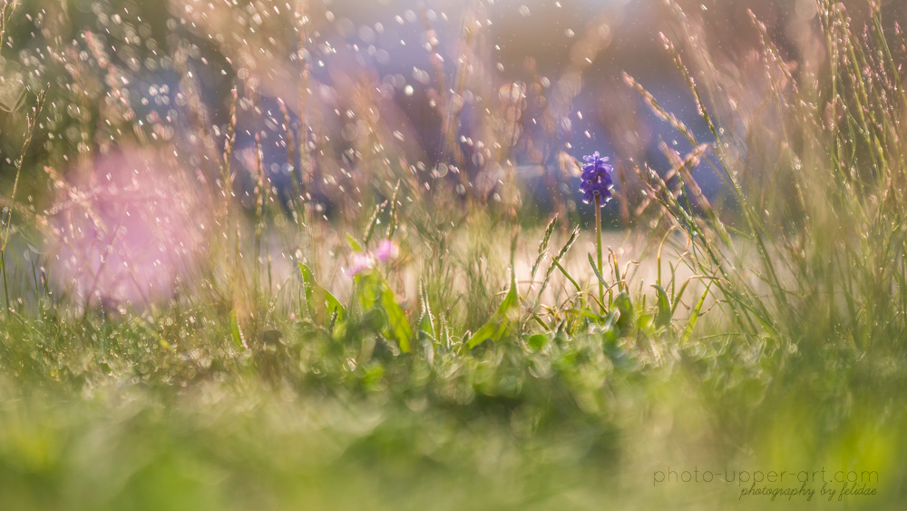 A tale of spring and its weather - Part II by FeliDae84