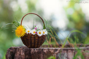 Spring in a basket by FeliDae84