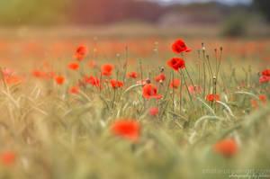 Poppy love II by FeliDae84