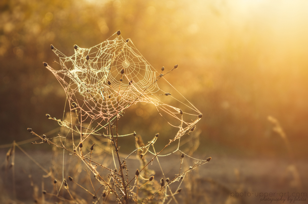 The magic of a morning in autumn II by FeliDae84