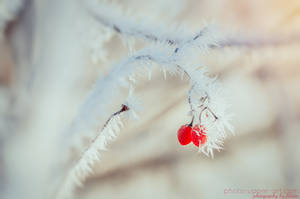 Detail of a winter morning IV by FeliDae84