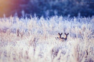 Good morning, winter - Two by FeliDae84
