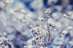 The hues of winter