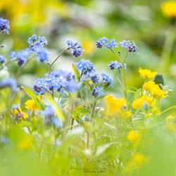 Spring meadow by FeliDae84