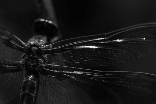 Giger Fly