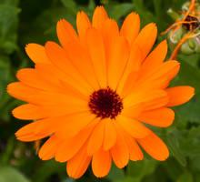 Orange! by ninaheather