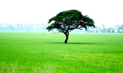 Lonely Tree by pramod22