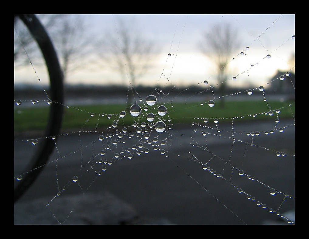 Reflection in The Web by captsolo