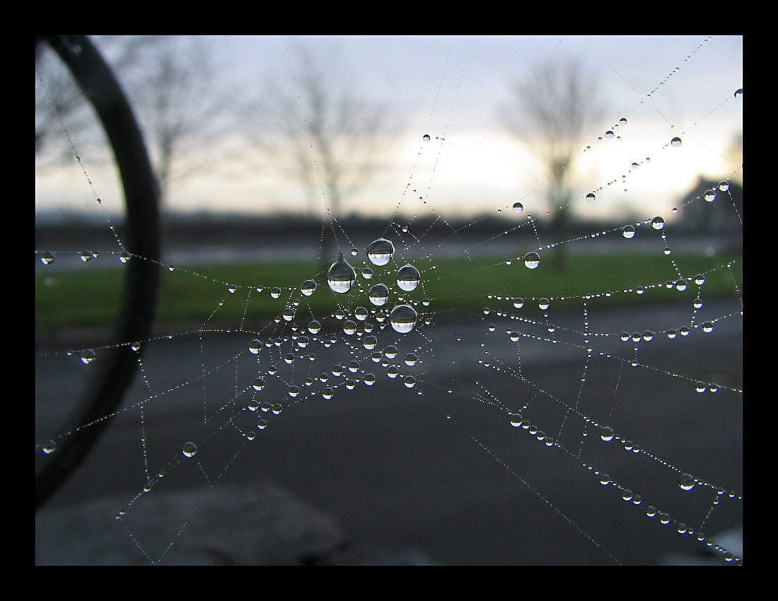 Reflection in The Web