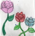 -Roses