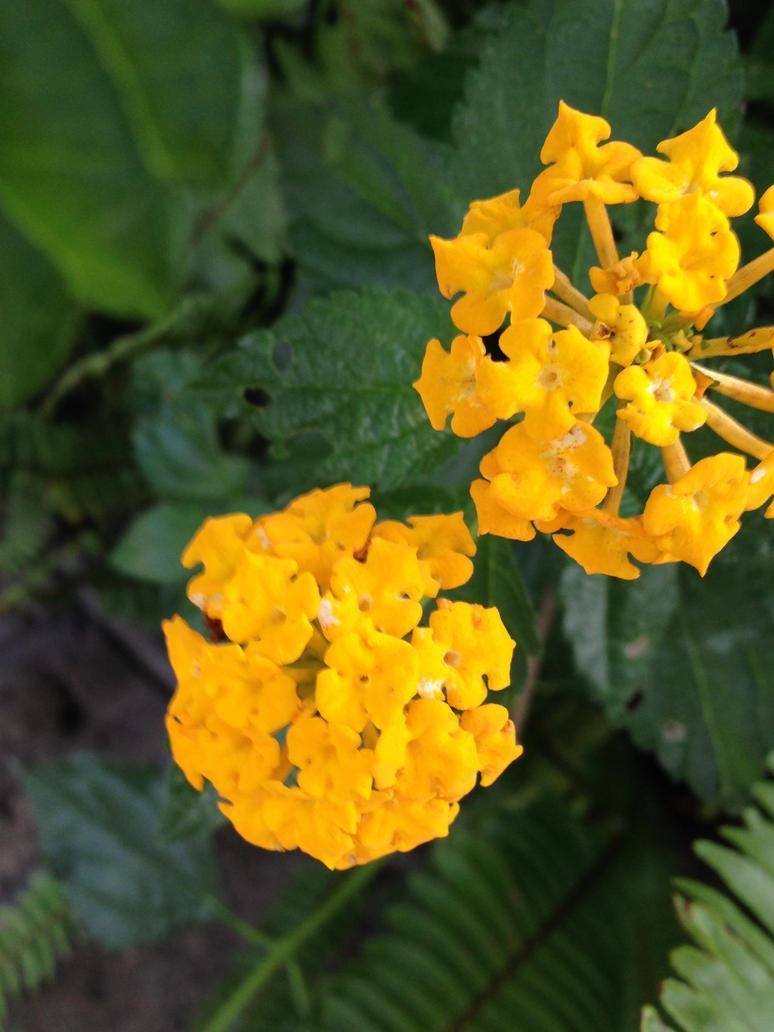 Tiny Yellow Flowers By Yuiharunashinozaki On Deviantart