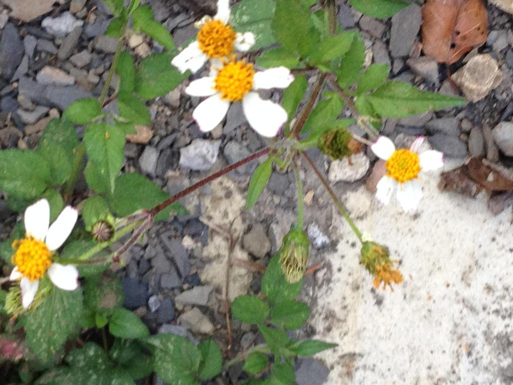 Tiny White Flower Thingies By Yuiharunashinozaki On Deviantart