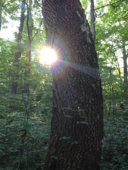 Light flare on tree