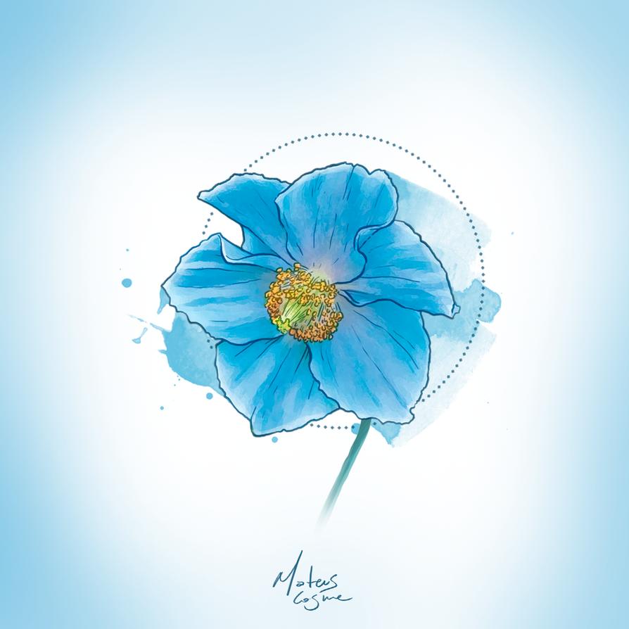 Watercolor Himalayan Blue Poppy By Mateuscosme On Deviantart
