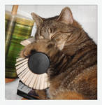 Rolodex are great pillows IV