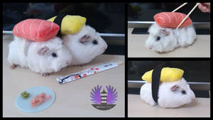 April fools - SushiCui - Guinea Pig Sushi Cosplay