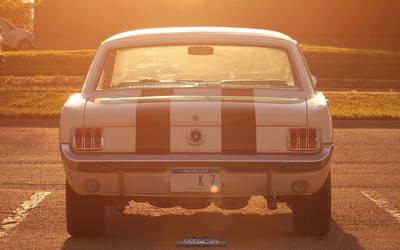 Good Morning Mustang by joerayphoto