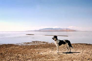 Bindi on the Great Salt Lake.