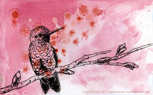 Hummingbird by cael-illus