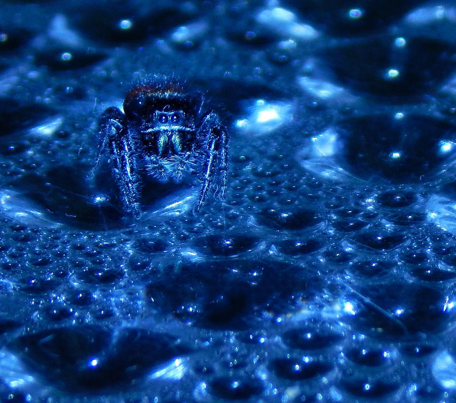 Jumping Spider on Plexiglass by DoctorNono