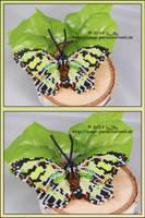 Gruener Schmetterling by Zoey-01