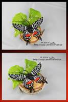 Schmetterling5 by Zoey-01