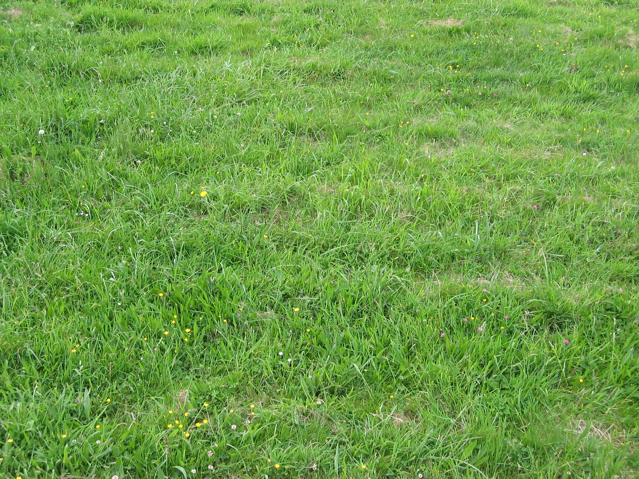 Grass Landscape Landscape grass by marc31 on deviantart landscape grass by marc31 landscape grass by marc31 workwithnaturefo