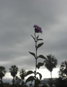 xXx-Blood-Orchid-xXx's Profile Picture