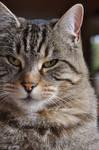 Me, the cat