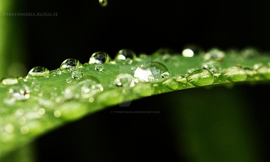 Raindrops by Typisktmaria