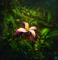 Deep Forest Bloom