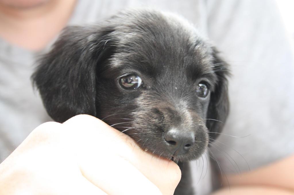 Puppy in hand by Makki-Summer
