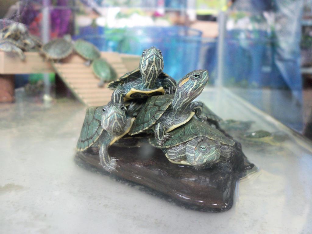 Baby turtles by Makki-Summer