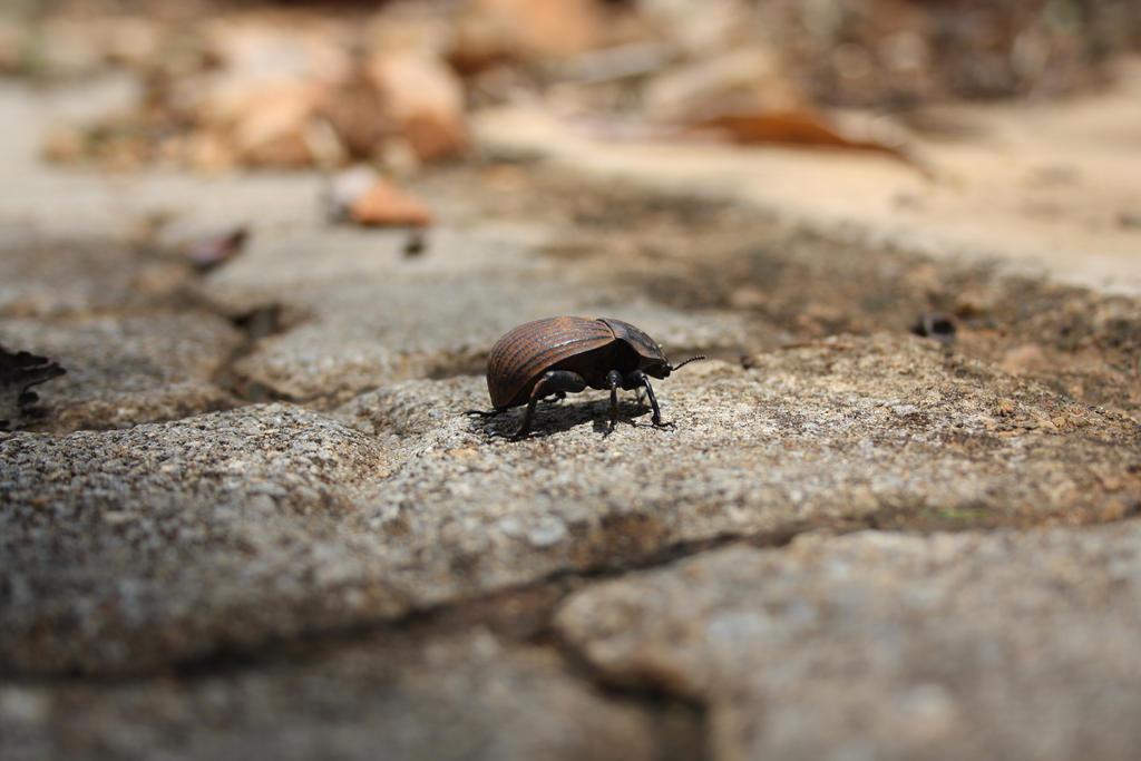 Beelte on the Bricks by Makki-Summer