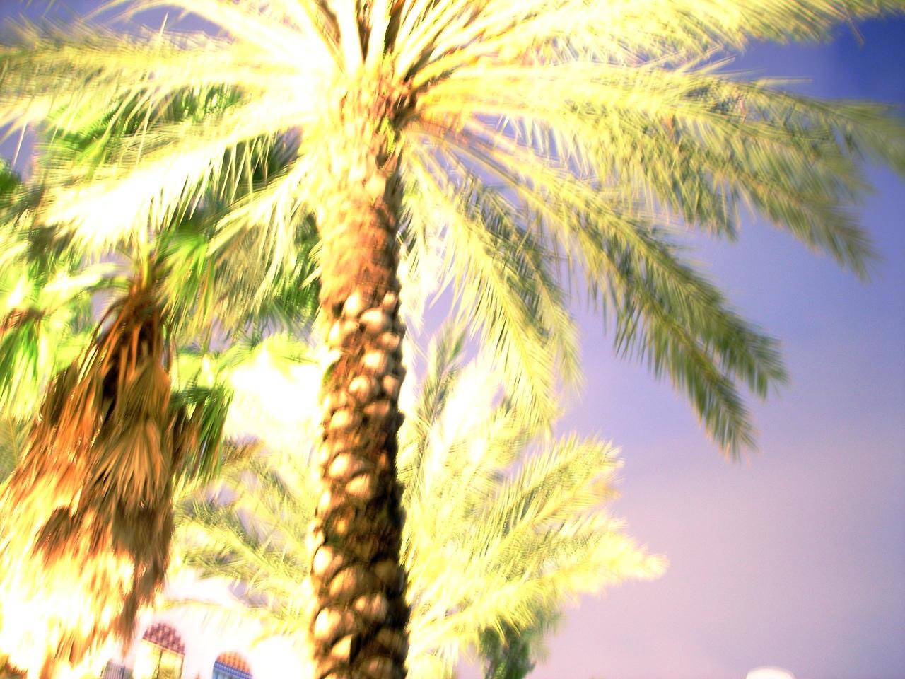 palm tree watercolor - photo #1