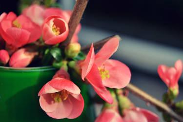 Flowers by SweetKotori