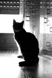 Cat! by SweetKotori