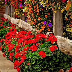 Telluride Floral Display