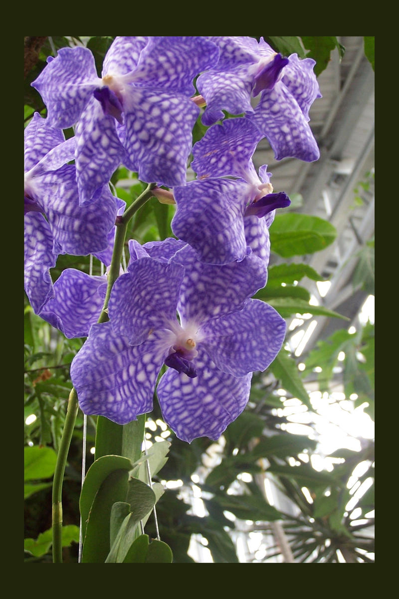 une branche d 39 orchidees by nathalie37 on deviantart. Black Bedroom Furniture Sets. Home Design Ideas