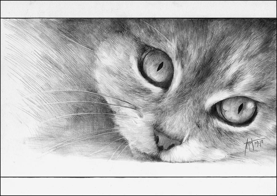 Anton Phoenix - Autumn Cat by antonphoenix
