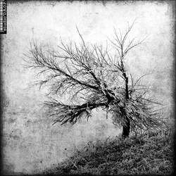Frozen tree by PatriceChesse