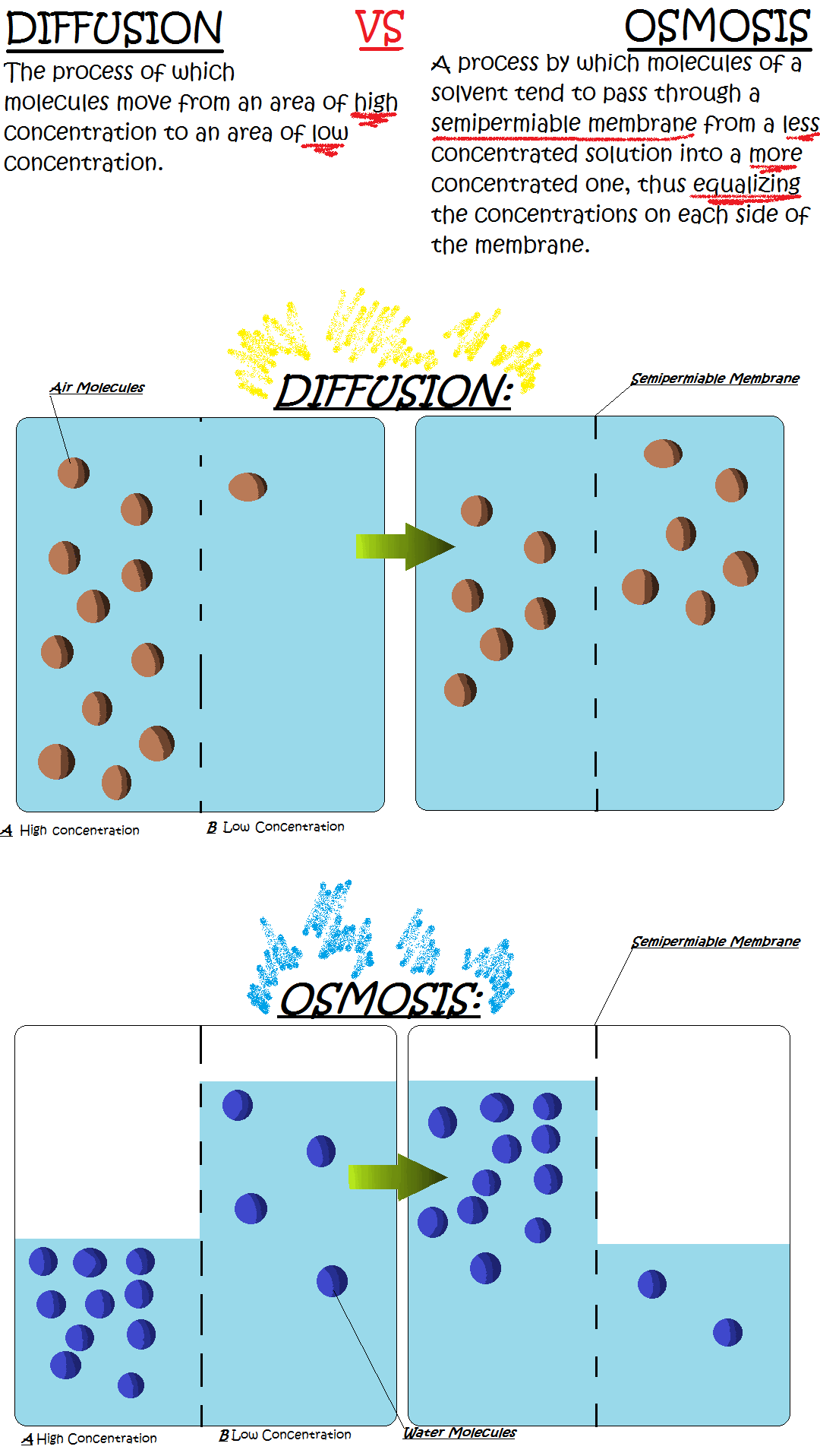 Osmosis Vs Diffusion By I