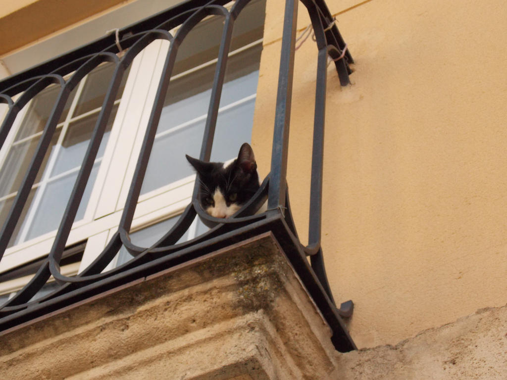 Kitten in a balcony by Cathysa