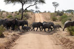 Elephant Crossing by rbwissner