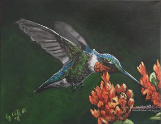 Hummingbird my painting by cliford417