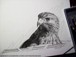 Untitled falcon by ThaddeusDaruszka